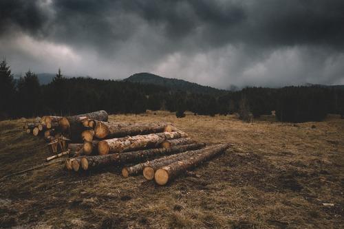 proteger le bois des intemperies - acheter bois de chauffage en ligne, livraison partout en France - Combustibles Gruchy