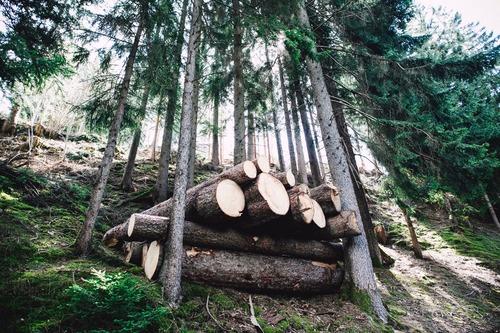 comment bien stocker le bois - Combustibles Gruchy